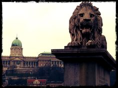 One of the lions of the Szechenyi Bridge (Chain Bridge) with the dome of the Royal Palace in the background - Budapest, Hungary
