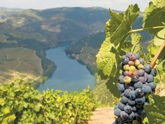 "Douro Valley - ""The stunning vineyards of the Douro Valley were first cultivated hundreds of years ago. Now they've been enhanced by state-of-the-art hotels and restaurants"" - The Independent"