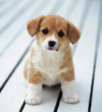 #baby #puppy