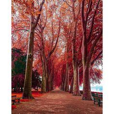 Instagram media tourtheplanet - Chinon, Centre, France #TourThePlanet Photography by @saaggo