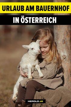 Lamb, Animals, Children Playground, Mountain Landscape, Animales, Animaux, Animal, Animais, Baby Sheep