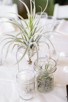 Simple mason jars with air plants--can also do succulents. Can plant them in colored stones or leave it potting soil. Can add 45s for the vintage music theme.
