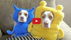 Quite Possibly The Best Dog Shaming Video Ever!  Must See!