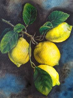 Lemon Painting, Watercolor Painting Techniques, Fruit Painting, Small Canvas Paintings, Acrylic Painting Canvas, Vegetable Painting, Lemon Art, Watercolor Fruit, Fruit Photography