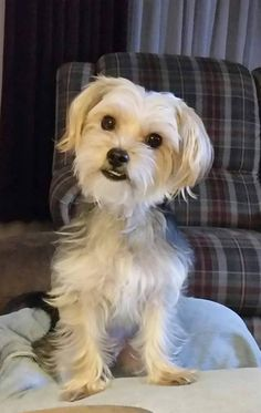 ~ Daily Dose of Cuteness ~  Jack, such a sweetie! (Shared by Bethann George Shoemaker) #DogoftheDay http://aboutmorkies.com/ Follow us: Facebook.com/YorkiesMorkiesMaltese Twitter.com/morkienation #dog #doglovers #animals #pets #yorkies #yorkie #yorkielovers #petlovers #dogowners #puppy #adorablepets #sillydogs #smallanimals #instadogs #instayorkie #instapuppy #instaanimals #petsofinstagram #dogsofinstagram #yorkieofinstagram #puppylove #animallovers #ilovemypet #ilovemyyorkie #igdogs #igpets