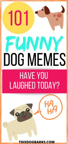 Need a laugh today? Check out this collection of funny dog memes from around the internet. We think it will brighten your day! Yorkie Puppy, Chihuahua Puppies, Funny Dog Memes, Funny Dogs, Funny Dog Pictures, Cute Pictures, French Bulldog Breed, French Bulldogs, Corgi Breeds