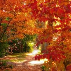 Indian Summer Fragrance Oil by Natures Garden is a blend of apples, strawberries, herbs, and greenery aroma. You will love this summer fragrance. Autumn Day, Autumn Leaves, Autumn Walks, Autumn Nature, Autumn Forest, Winter, Beautiful World, Beautiful Places, Autumn Scenes