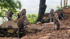 Monkey Forest, Lombok, Indonesia