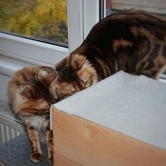 Emma: Have you seen the weekend hiding in our box Elsa? Where are you looking for the weekend furriends? Don't miss a post from Weekend Is Coming, Elsa, Box, Cats, Gatos, Boxes, Kitty, Cat, Jelsa