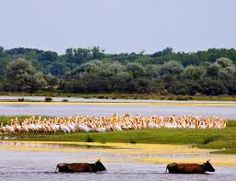 The Danube Delta Experience – 7 days via Bucharest Beautiful Places To Visit, Cool Places To Visit, Danube Delta, Going On A Trip, Eastern Europe, World Heritage Sites, Travel Destinations, Landscape, Fun Activities