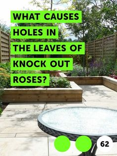 What Causes Holes in the Leaves of Knock Out Roses?. Knock out roses are prized for being tough. They're named Earth Kind roses because they are disease-resistant, drought-tolerant, hardy and relatively hassle free. Their plentiful blooms, mounding shape and self-cleaning habit -- they drop their spent blooms -- make them an ideal landscape plant.... Knockout Roses, Rose Varieties, Growing Roses, Rose Leaves, Rose Bush, Landscaping Plants, Drought Tolerant, Knock Knock, Garden Ideas