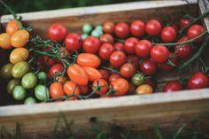 Tomato Seedlings, Countryside, Vegetables, Life, Food, Essen, Vegetable Recipes, Meals, Yemek