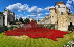 From 5 August, the official opening of the installation, each porcelain poppy will be available to buy for £25, with all proceeds going to military charities. Photo: © Rex