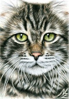 Drawing of Cats Face, 2013 by Nicole Zeug, www.arts-and-cats.de