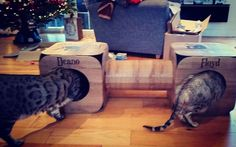 Awwww Deano and Floyd are gorgeous!  thank you so much!  we are so pleased they like them  #cat #catsofinstagram #cats_of_instagram #catfurnature #catfurniture #catsinboxes #cattoy #INSTACAT_MEOWS #cutecat #PurrMachine #catsinboxes #catbox #Excellent_Cats #BestMeow #dailykittymail #thecatniptimes #catcube #catpod #ArchNemesis #FlyingArchNemesis #myindoorpaws #ififitsisits #cutecatcrew #catchalet #catnip #themeowdaily #kitty #dailykittymail #catgrass