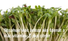 Najzdravšia bylinka na svete: Čistí cievy, lieči akné a ničí rakovinu. Táto bylinka obsahuje viac železa ako špenát! Korn, Parsley, Celery, Herbs, Vegetables, Health, Health Care, Vegetable Recipes, Herb