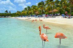 Love the flamingoes! Aruba Hotels, Resorts, Vacation Destinations, Vacation Spots, Vacation Rentals, Flamingo Beach Aruba, Aruba Island, Island Resort, Southern Caribbean
