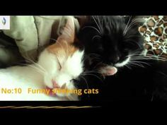 Funny Cats   Funny Cats Vine Compilation June 20 2016 Composite Video, Vine Compilation, Funny Cats, Vines, Youtube, Animals, Animaux, Funny Kitties, Animal