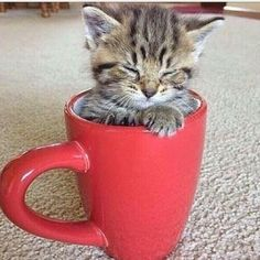 Keep Calm and Love Cats. :) #catsrule #cutecat #catsareawesome #cats #kitties #mugsandcats #cuddlycats