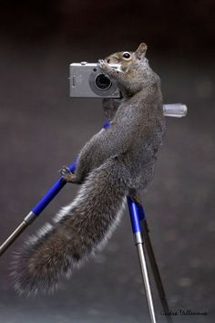 ~~Shot from the top ~ squirrel (aka assistant photographer :-) by Andre Villeneuve~~