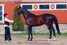 Standardbred - stallion Armbro Baccarat