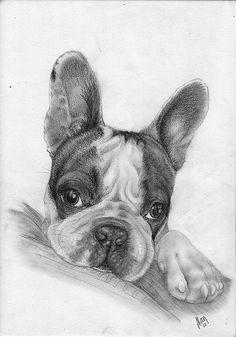 French Bulldog by AlanKK.deviantart.com on @deviantART
