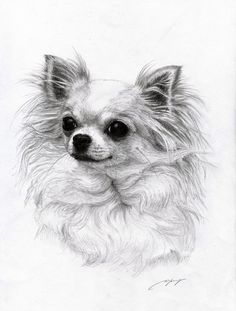 Chihuahua 3 by ~Danguole on deviantART