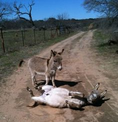 "Silly_Donkeys  |  ""Dude. Get up. You're making a complete ass of yourself."" :D"