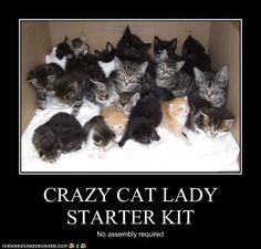 Crazy Cat Lady Starter Kit - No assembly required.