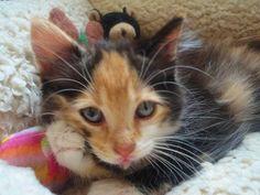 My baby girl, London. Cutest kitten ever? Yeah, maybe.  <3