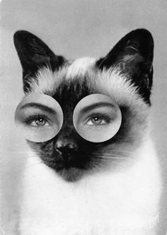 cat eyes #cat #eyes
