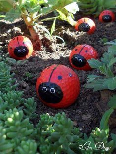 Ladybird in the garden