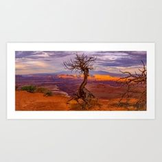 Canyonlands National Park Tree Panoramic Print Art Print