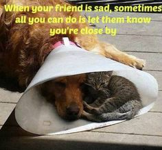 Funny Animal Pictures Of The Day - 23 Pics.this pic is absolutely adorable! Cute Funny Animals, Funny Dogs, Cute Cats, Chat Maine Coon, Cute Animal Pictures, Animal Quotes, Animals Beautiful, Baby Animals, Cats And Kittens