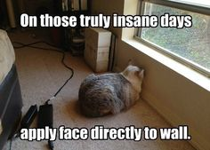 Funny pictures of the day -  On Those Truly Insane Days Apply Face Directly To The Wall