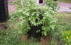 planting vertical gardens
