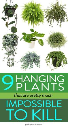 The Best 9 Indoor Hanging Plants Even A Beginner Won't Kill Beginner plant lovers, this article is for you! Check out these 9 gorgeous indoor hanging plants that you can add to your home today and not even worry about killing them!