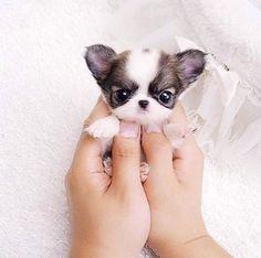 Hola Señorita #cute #Ihopeimakeyousmiletoday.