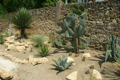CactusPassion Rocailles