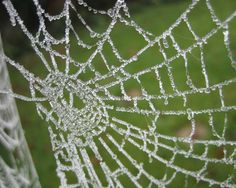 web frost photo projects