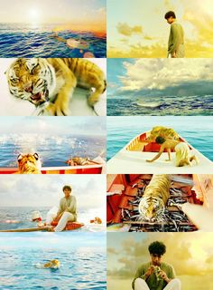 Richard Parker - Life of Pi   The most beautiful movie.