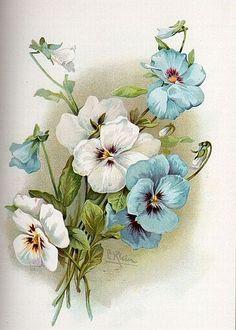 рисунки букетов цветов карандашом - Поиск в Google