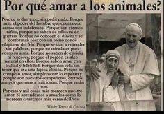 ¿Por qué amar a los animales?. Por la Madre Teresa de Calcuta