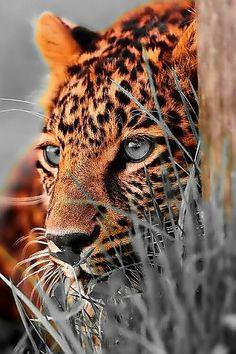Most Beautiful Animals, Majestic Animals, Beautiful Cats, Beautiful Pictures, Nature Animals, Animals And Pets, Nature Nature, Cute Baby Animals, Funny Animals