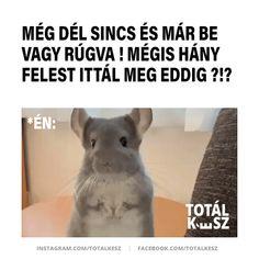 #viccek #vicceskép #viccesképek #viccesgif #viccesvideok #humoroskepek #poén #poénos #mém #mémek #magyarmeme #magyarmemek #hülyeség #hülyeségek #nevetés #nevess #részeg Moka, Funny, Quotes, Animals, Quotations, Animales, Animaux, Ha Ha, Qoutes