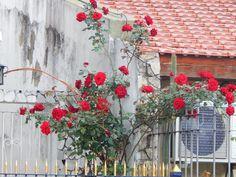 rosas+rojas+:+para+variar despues+subo+mas+de+babasonicos+|+ahorayya2