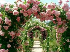 What a fantastic Rose Arbor Tunnel!It must smell divine! Pastel/rosy blog following back similar blogs :) www.the-pastel-corner.tumblr.com