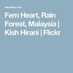 Fern Heart, Rain Forest, Malaysia | Kish Hirani | Flickr