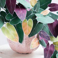 Paper Chinese Money Plant DIY — The Apple of My DIY art garden indoor plants