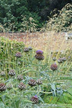 Cynara at Scampston Hall. Piet Oudolf, garden designer